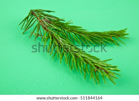 branch of fir-tree is isolated on a green background closeup