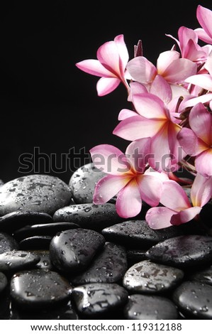 Branch of frangipani with zen stones