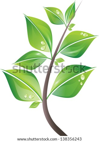 Branch of fresh green leaves with drops. Isolated on white background