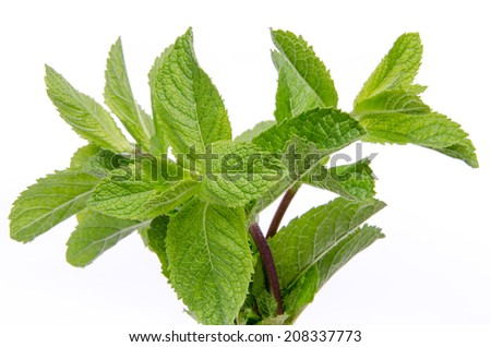 Branch of fresh mint, isolated on white