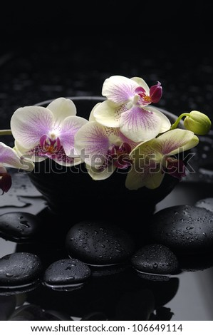 branch of gorgeous orchid in a black bowl  with stones