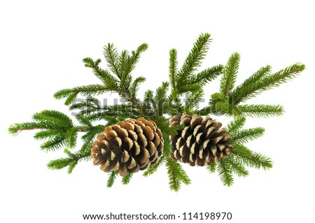Branch of Green Christmas tree with cones isolated on white - stock photo