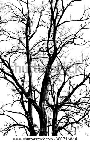 Branch of leafless tree silhouette on white background