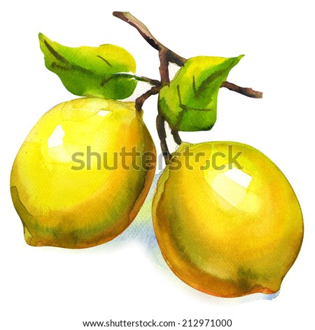 Branch of lemons with leaves isolated - stock photo