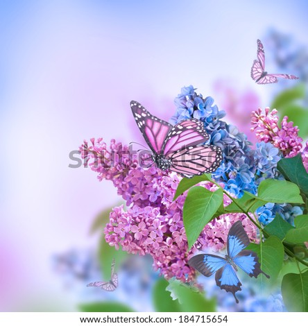 Branch of lilac blue and pink butterfly - stock photo