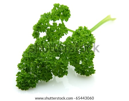 Branch of magnificent parsley on a white background closeup