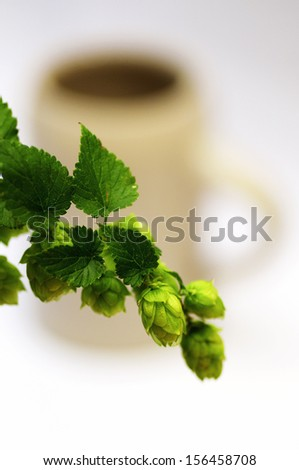 Branch of ripe hops in front of a stein beer mug - stock photo