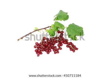branch of ripe red currants isolated on a white background
