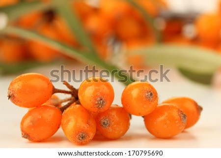 Branch of sea buckthorn close up - stock photo