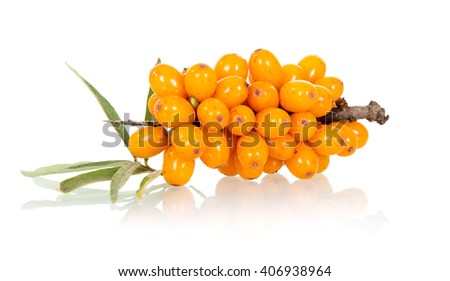 Branch of sea-buckthorn with ripe berries isolated on white background. - stock photo