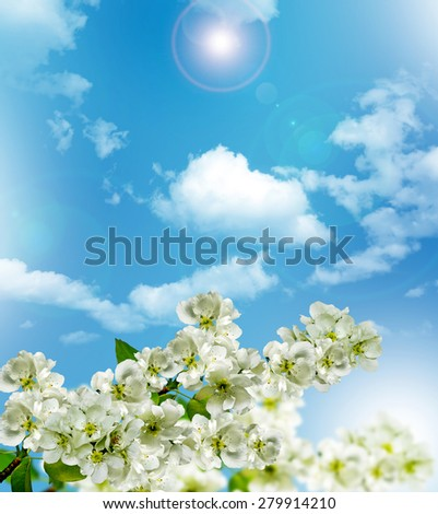Branch of the cherry blossoms against the blue sky with clouds - stock photo