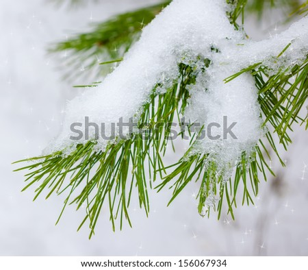 Branch of the Christmas fir-tree with the snow in the winter wood - stock photo
