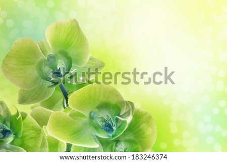 Branch of the green orchid on beauty background - stock photo