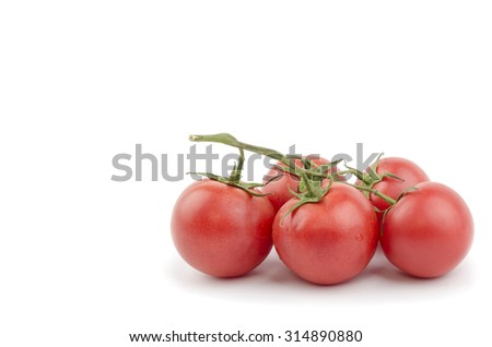 branch of tomatoes on a white background - stock photo