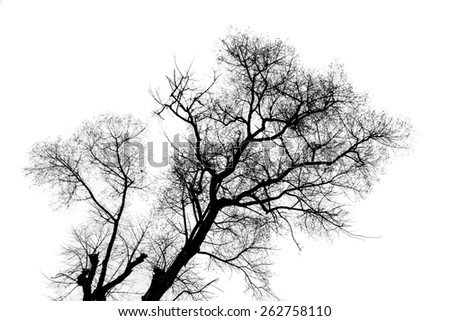 branch of tree isolate