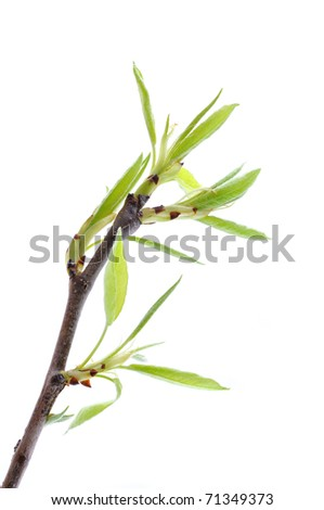 branch of tree with green leaf