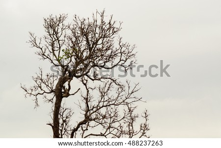 branch of Tree without Leaves