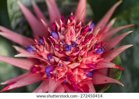 Branch of tropical flowers - stock photo
