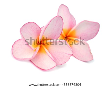Branch of tropical flowers frangipani (plumeria) with drops of water - stock photo