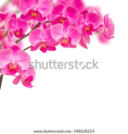 branch of violet orchids on branch isolated on white background