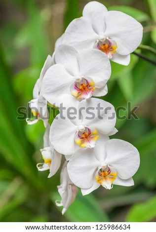 Branch of white orchid on green background. - stock photo