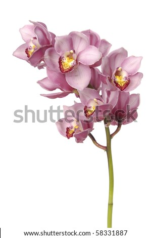 Branch orchid on white - stock photo