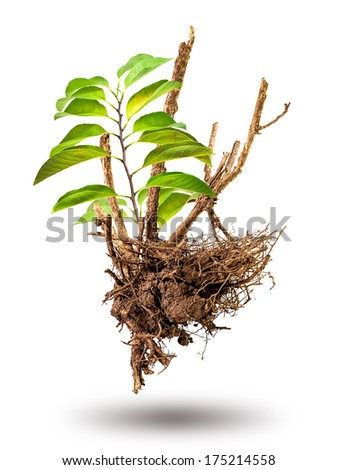 Branch out of sprout on the dead tree - stock photo