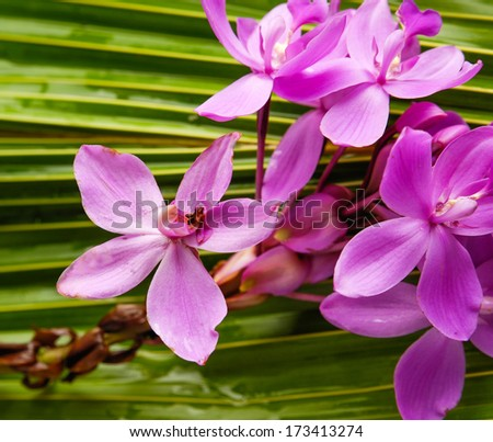 Branch Pink orchid and coconut leaf - stock photo