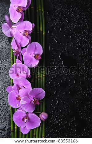 Branch pink orchid with bamboo grove on wet black background