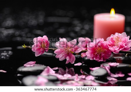 branch pink tropical flower candle with therapy stones - stock photo