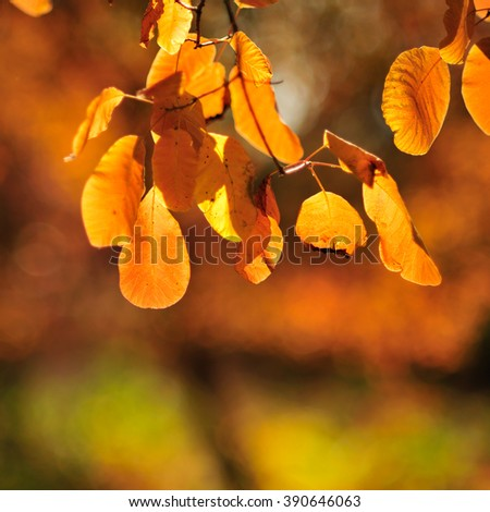 branch plants with orange autumn leaves on a blurred background