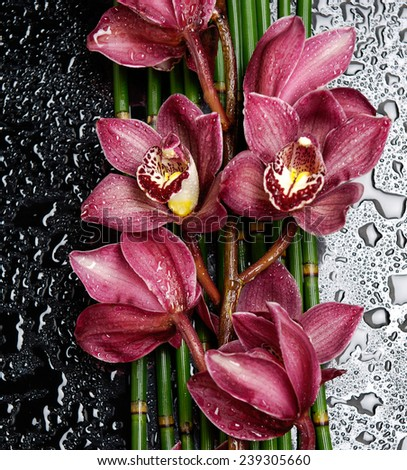 Branch red orchid with on bamboo grove on wet - stock photo
