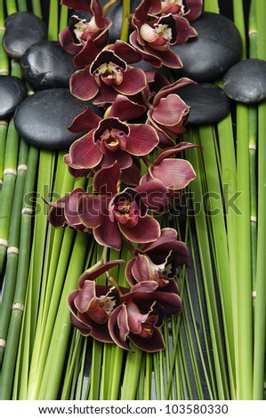 branch red orchid with stones and green plant - stock photo