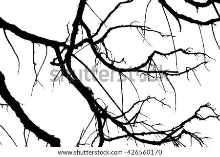 Branch silhouette on a white background. - stock photo