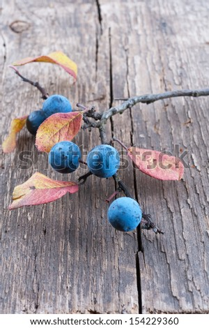 Branch sloe berry on a old textured wooden background - stock photo