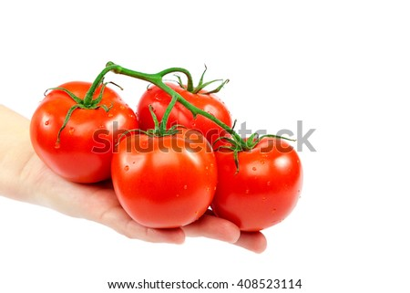 Branch tomato in a female hand isolated on white background. - stock photo