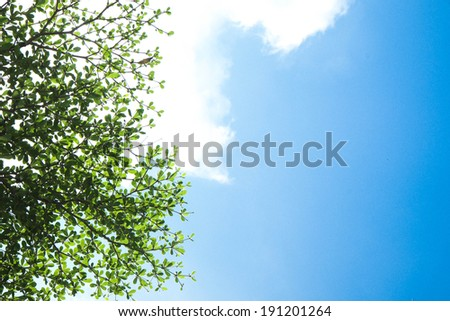 branch tree and bluesky - stock photo