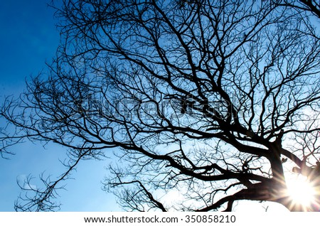 Branch tree silhouette.