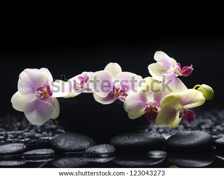 Branch white orchid in bowl with therapy stones