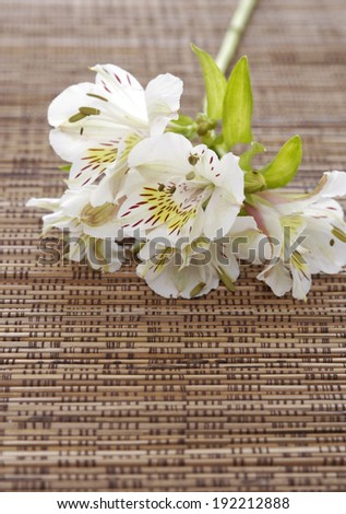 branch white orchid on mat