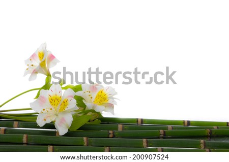 branch  white orchid on thin bamboo grove  - stock photo