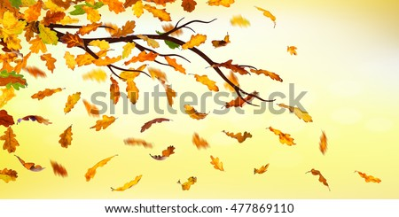 Branch with falling autumn oak leaves on natural background.