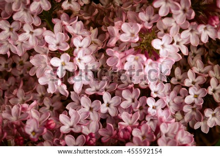 Branch with fresh blooming spring lilac flowers, on wooden background - stock photo
