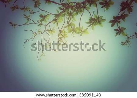 Branch with leaves and sky background, process vintage tone