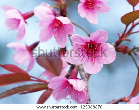 Branch with pink sakura blossoms. Natural background - stock photo