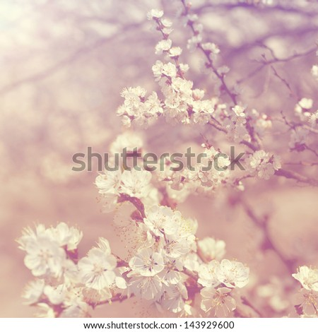 Branch with  sakura blossoms retro background - stock photo