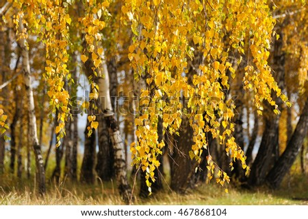 Branch with yellow leaves in the forest