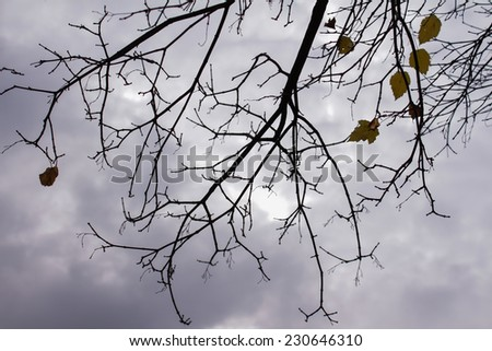Branches against the gray autumn sky