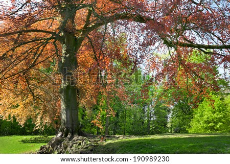 Branches and trunk of trees in spring. Spring landscape. - stock photo