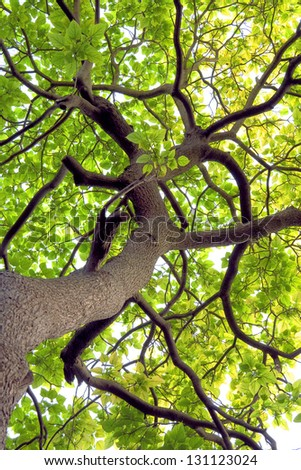 Branches and trunks of trees in spring. Spring landscape. - stock photo